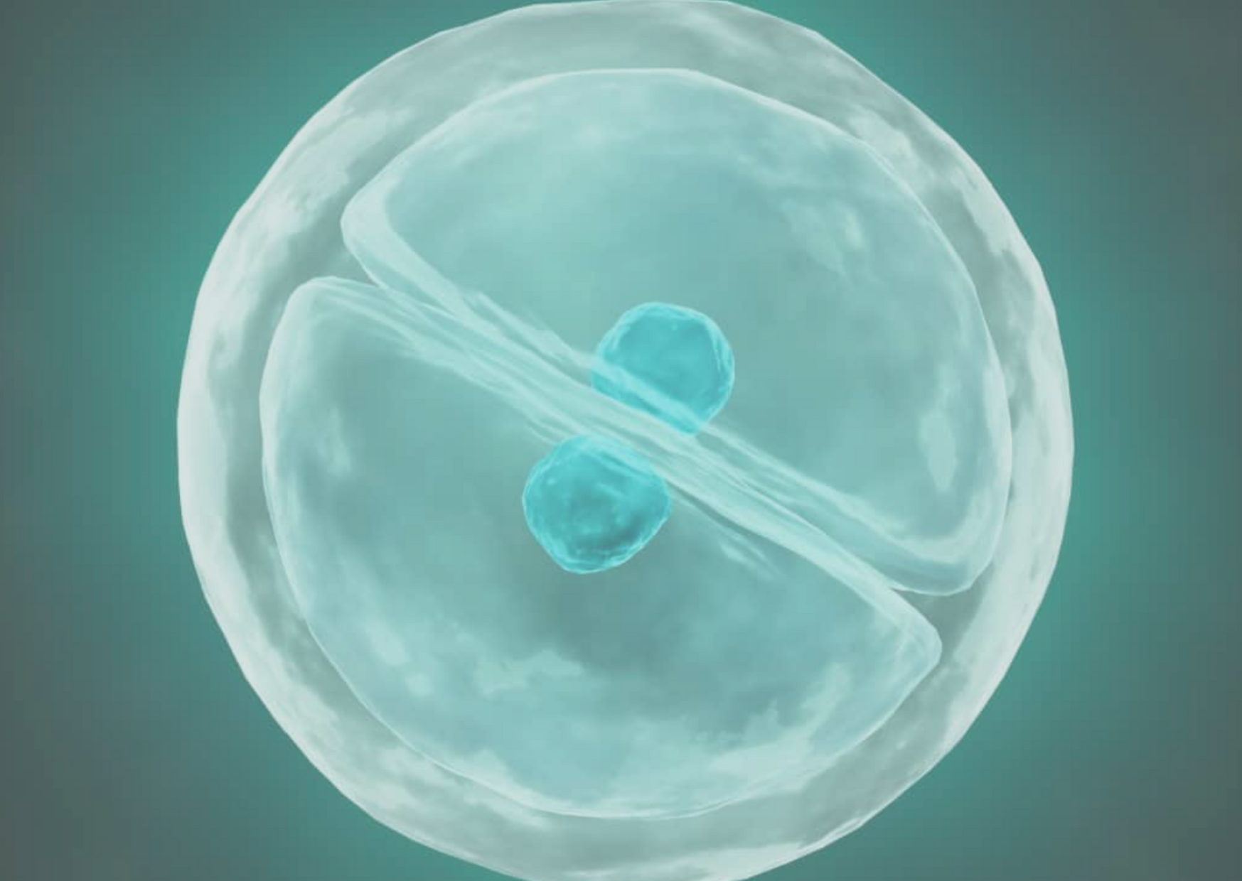 IVF Support